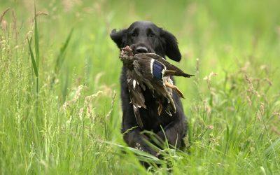 Duck Season In Southern Louisiana