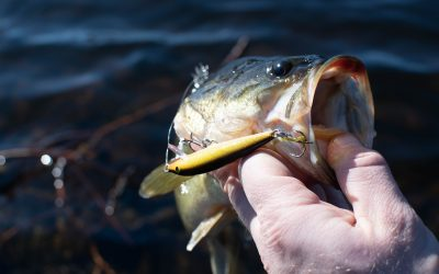 Winter Tackle Box: 4 Bass Lures You Need